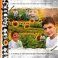 Sunflowers_sm
